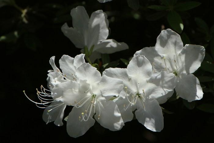 庭の花を写す_d0150720_8373238.jpg