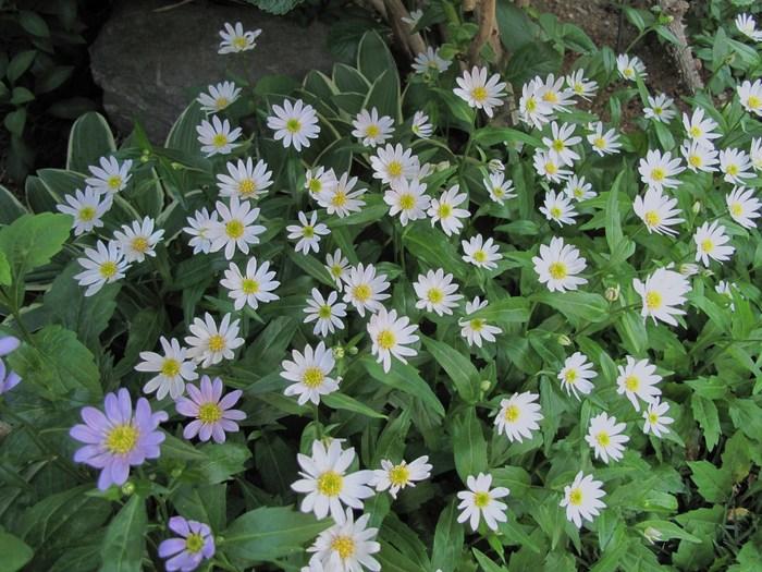庭の花を写す_d0150720_8483781.jpg
