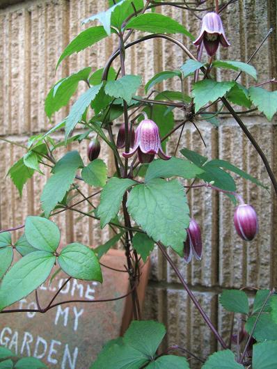 庭の花を写す_d0150720_852466.jpg