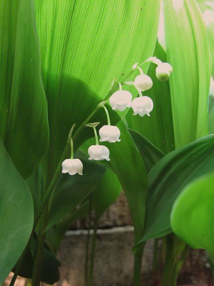 庭の花を写す_d0150720_853063.jpg