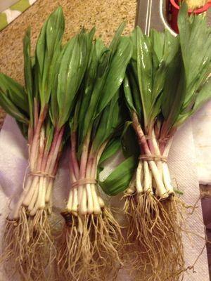 春の野菜とお料理達_f0095325_951230.jpg