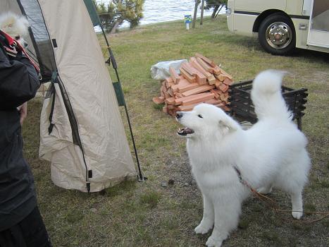 キャンプにお邪魔しました~!_b0177436_1872213.jpg