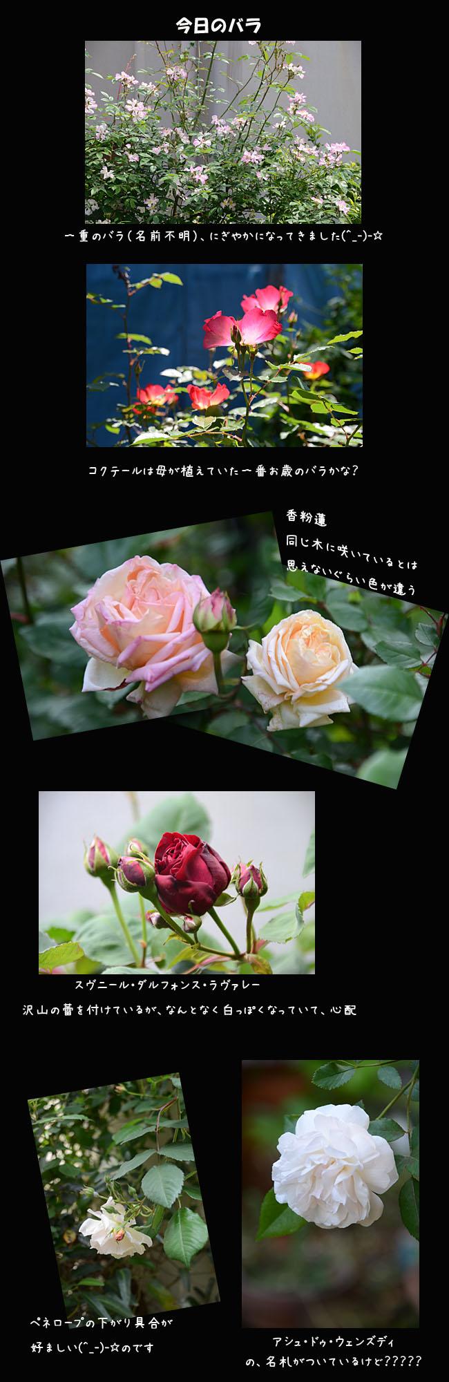 e0020954_19113667.jpg
