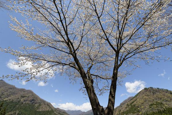 遅春の山里を訪ねて ①_e0321360_0272835.jpg