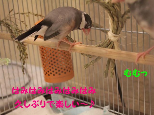 b0158061_22201153.jpg