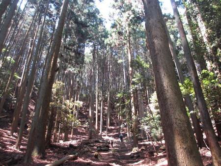 箕面クリーンハイキング 20キロ歩いた日記_d0202264_851386.jpg