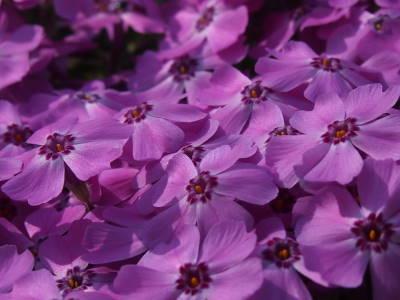 いろいろ咲くころ_a0129867_21565195.jpg