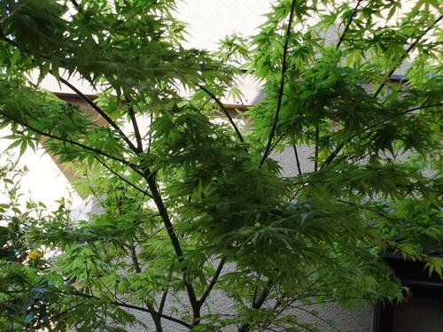 2003年「朝日歌壇」 入選歌_f0253572_11201660.jpg