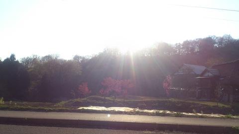 チューリップやっと咲いた!~ 赤い花はなんて言う花?_d0182179_14295161.jpg