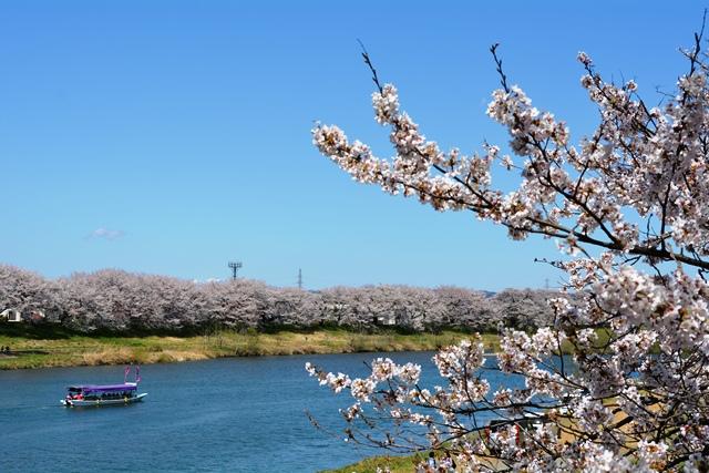 祝 ピーチ 関空~仙台就航!桜を追って、仙台・宮城へ!②_b0053082_1944401.jpg
