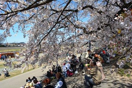 祝 ピーチ 関空~仙台就航!桜を追って、仙台・宮城へ!②_b0053082_19492318.jpg