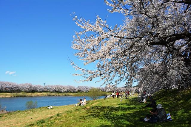 祝 ピーチ 関空~仙台就航!桜を追って、仙台・宮城へ!②_b0053082_19521768.jpg