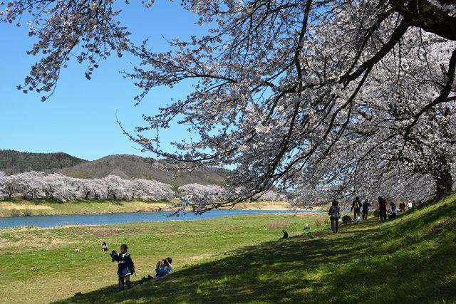 祝 ピーチ 関空~仙台就航!桜を追って、仙台・宮城へ!②_b0053082_19531892.jpg