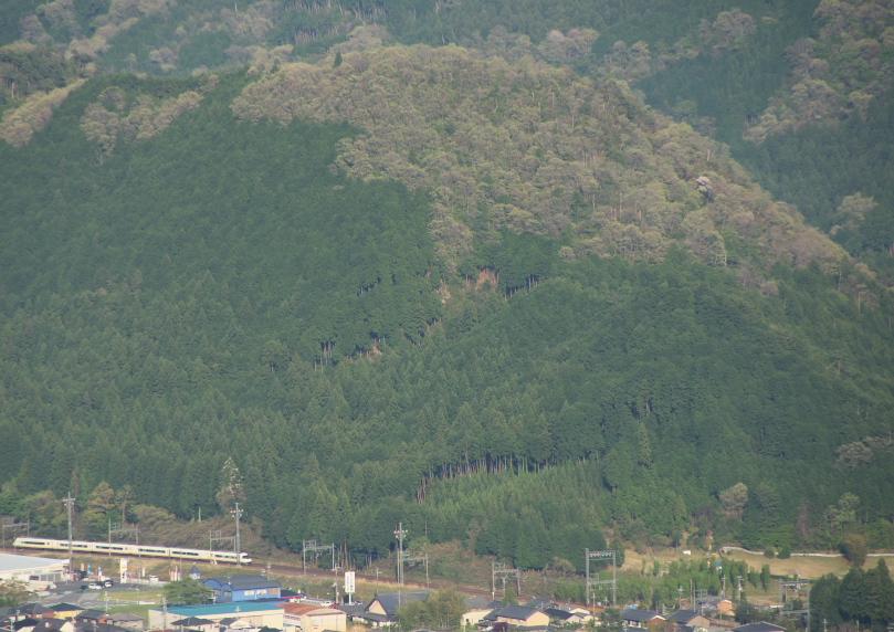 見晴台からの新緑_f0266284_163098.jpg