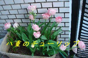 b0101991_18545427.jpg