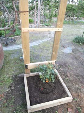 庭仕事の愉しみ_e0187897_1842956.jpg