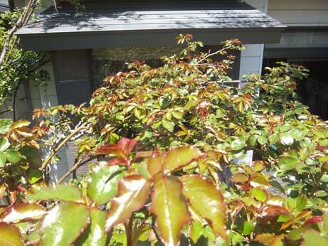 庭仕事の愉しみ_e0187897_198887.jpg