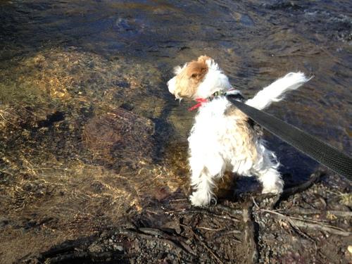 川で泳ぎたい!BBQが食べたい!ティファたん_a0229904_2130407.jpg