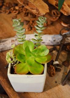 一目惚れサボテンと多肉植物_d0263815_15505533.jpg