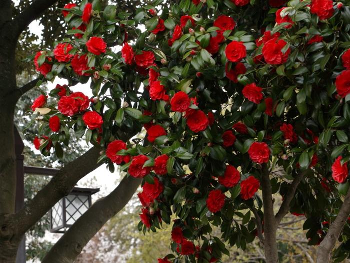 桜咲く公園_e0169421_1729404.jpg