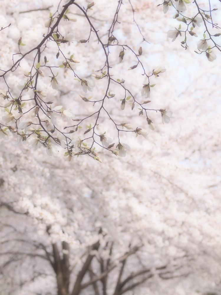 桜咲く公園_e0169421_17303615.jpg