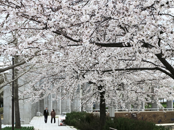 桜咲く公園_e0169421_17314314.jpg