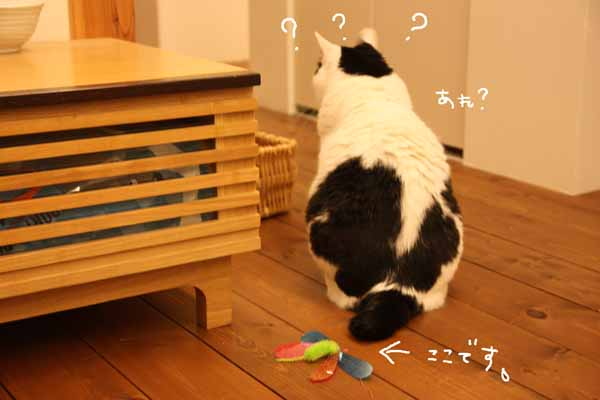 後ろ後ろ!!(・▽・)_b0223446_941280.jpg