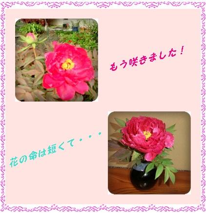 f0150470_2251597.jpg