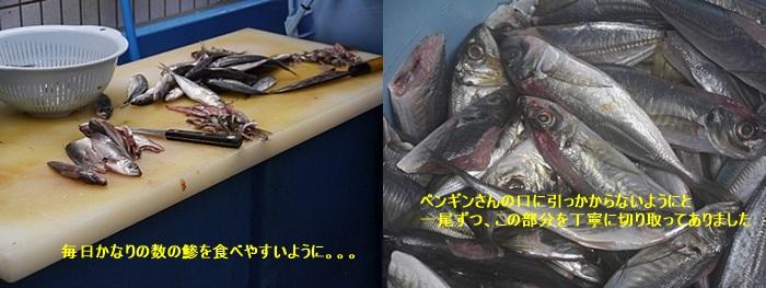 2013長崎帆船まつりとペンギン水族館 その1_b0175688_6474162.jpg