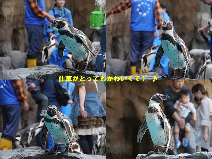 2013長崎帆船まつりとペンギン水族館 その1_b0175688_6574283.jpg