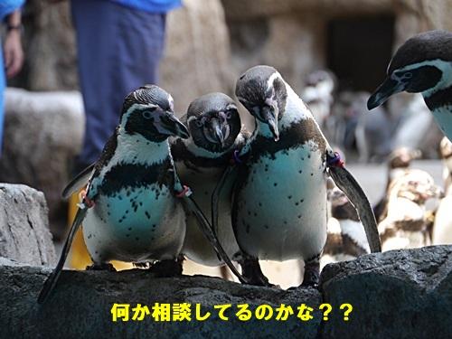 2013長崎帆船まつりとペンギン水族館 その1_b0175688_6593421.jpg