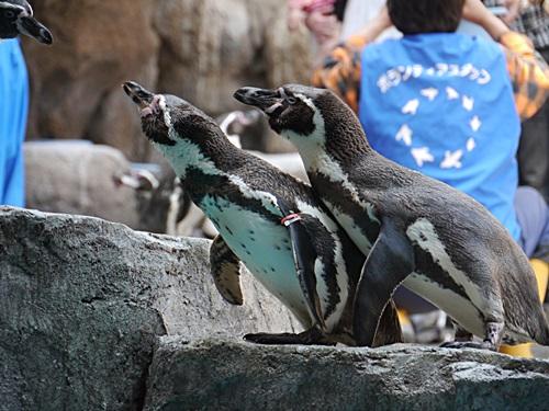 2013長崎帆船まつりとペンギン水族館 その1_b0175688_705352.jpg