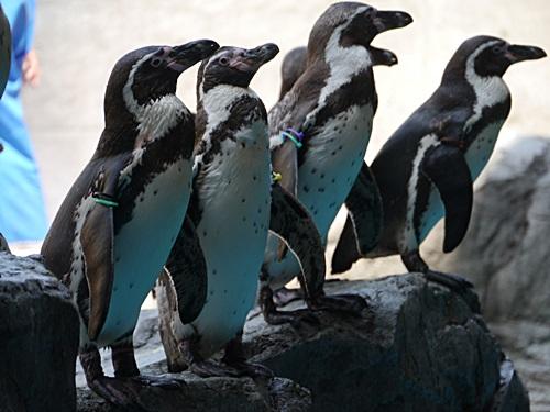 2013長崎帆船まつりとペンギン水族館 その1_b0175688_711369.jpg