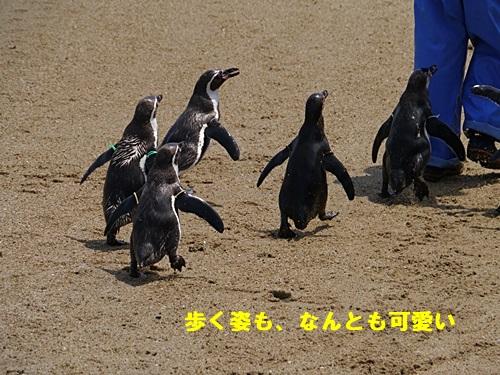 2013長崎帆船まつりとペンギン水族館 その1_b0175688_712063.jpg