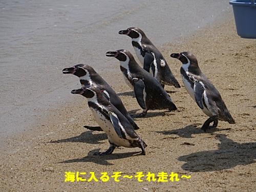 2013長崎帆船まつりとペンギン水族館 その1_b0175688_713099.jpg