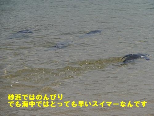 2013長崎帆船まつりとペンギン水族館 その1_b0175688_7133984.jpg