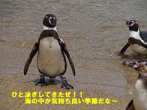 2013長崎帆船まつりとペンギン水族館 その1_b0175688_7153455.jpg