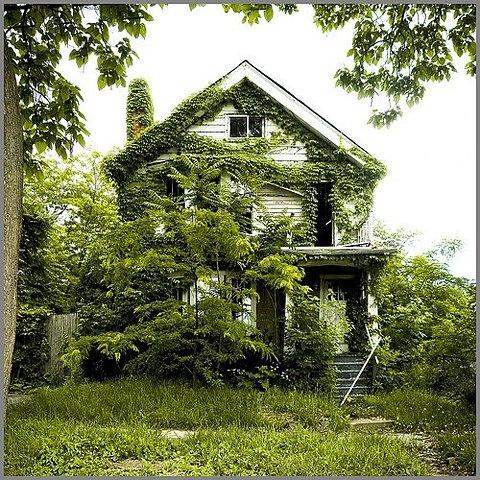 植物・庭の世界 60_f0213189_10134510.jpg
