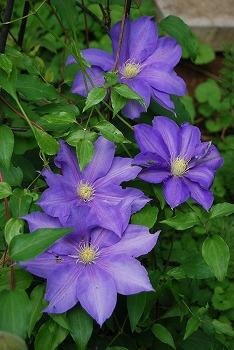 春の開花報告⑦_c0124100_111062.jpg