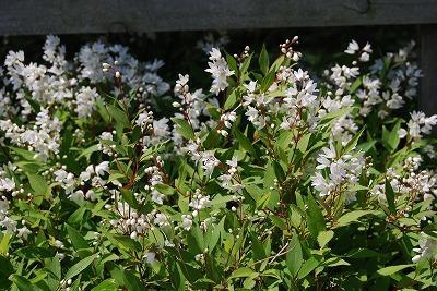 春の開花報告⑦_c0124100_113357.jpg