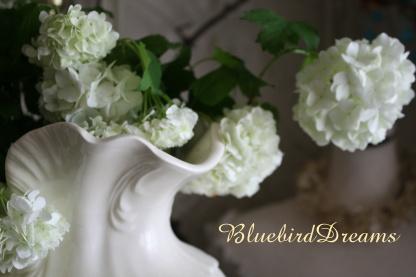 美しい花といたずらなチョコ。。_c0178104_1836465.jpg