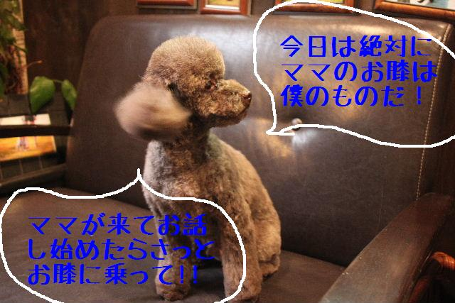 b0130018_340684.jpg