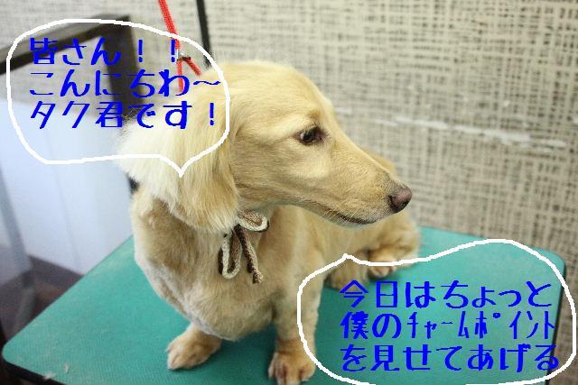 b0130018_3421095.jpg