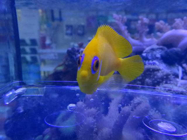 130501 海水魚・水草・淡水魚・金魚_f0189122_1221122.jpg