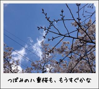 c0259934_1337590.jpg