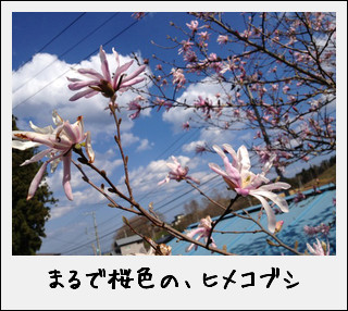 c0259934_15161195.jpg