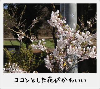 c0259934_15383251.jpg