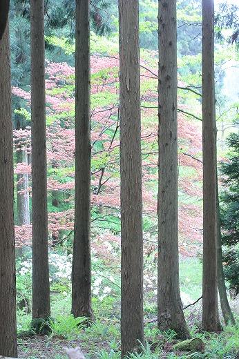 ・・・木の窓・・・_c0155950_2238196.jpg