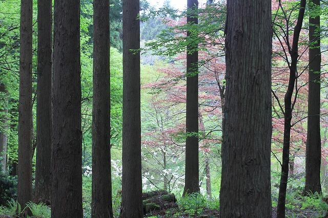 ・・・木の窓・・・_c0155950_22382690.jpg