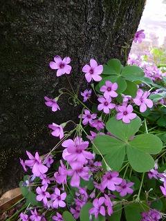 GW サージュと新緑と植物と♪_a0165160_7341525.jpg